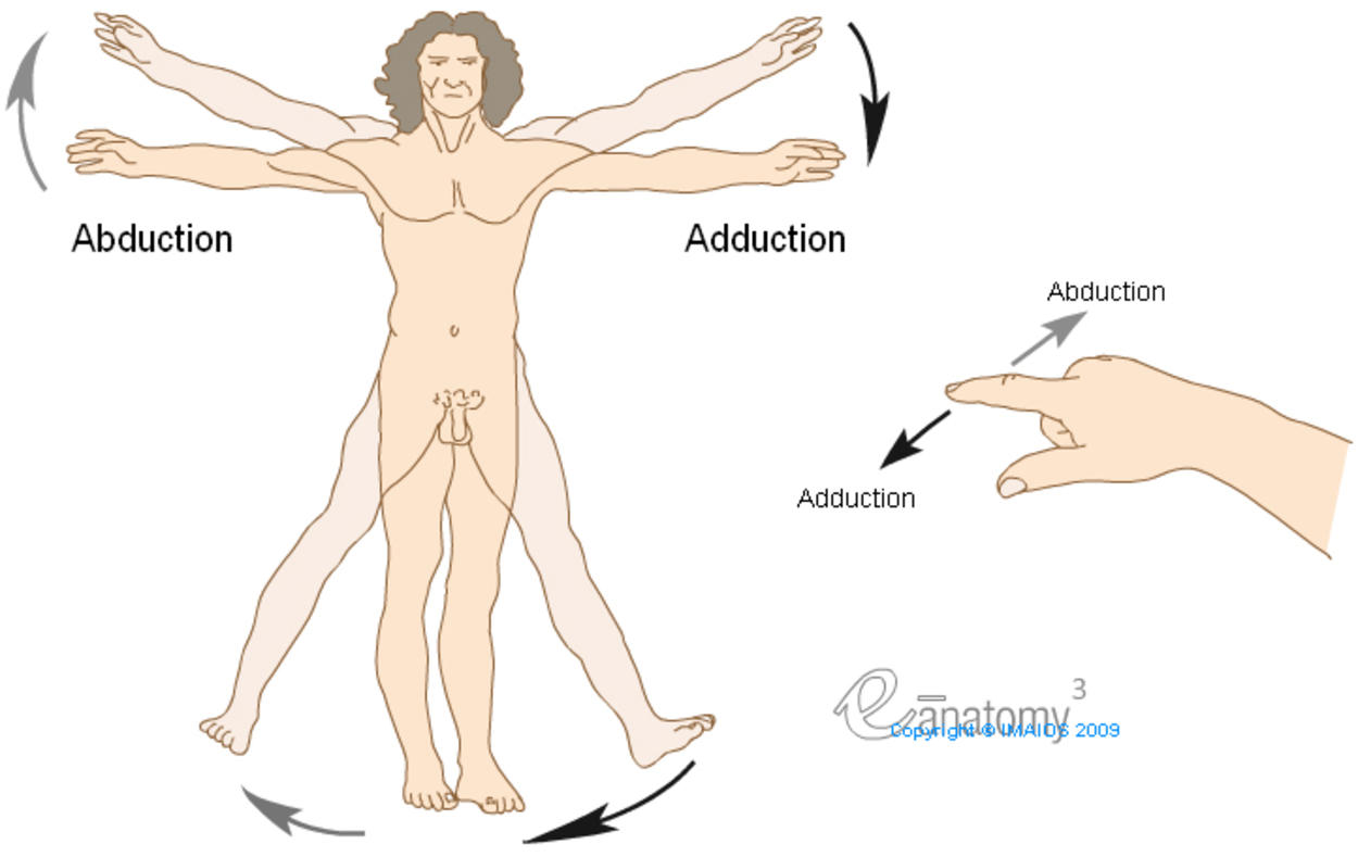 Mouvements - Anatomie : Abduction, Adduction, Diagramme, Illustrations : Dr. A. Micheau