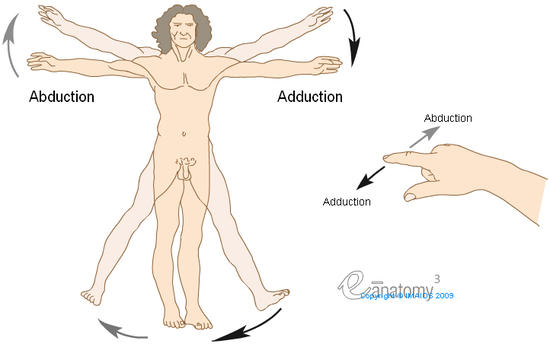 Movements - Anatomy : Abduction, Adduction, Diagram, Illustrations: A. Micheau - MD
