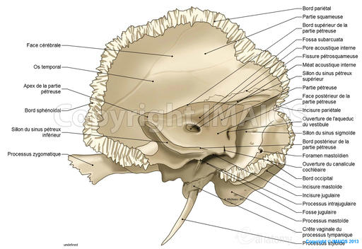 temporal-bone-petrous-part_medical512.jp